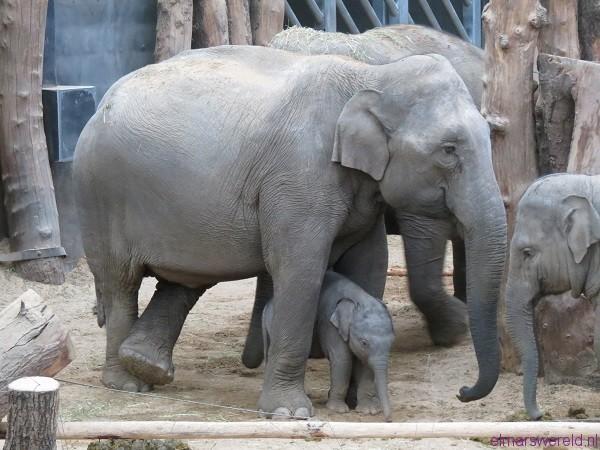 Indra en kids 1 klein